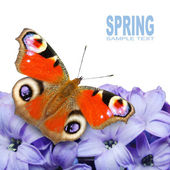 Spring blossom and a butterfly — Stock Photo