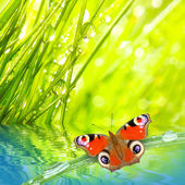 Fresh morning dew on a spring grass and butterfly — Stock Photo