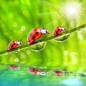Ladybugs — Stockfoto