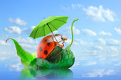 Little ladybug with umbrella enjoying life. — Stock Photo