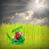 Little ladybug with umbrella enjoying life. — Stock Photo