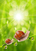 Fresh morning dew on a spring grass and two little snails — Stockfoto