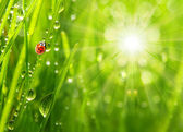Ladybug running on a dewy grass. — Foto de Stock