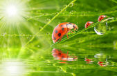 Three ladybugs running on a grass bridge — Stock fotografie