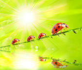 Three ladybugs running on a grass bridge — ストック写真