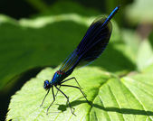 Damsel-fly — Stock Photo