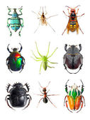 Insect collection — Stock Photo