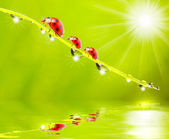 The ladybugs family — Foto Stock