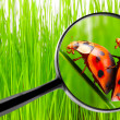 Magnifying glass and love-making ladybugs — Stock Photo #33580113