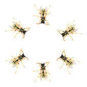 Common wasps ( Vespula vulgaris ) — Zdjęcie stockowe