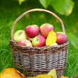 Red and yellow apples in the basket - Autumn at the rural garden. — Stock Photo