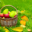 Red apples and green pears in the basket — Stock Photo