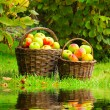 Fresh ripe apples in the basket. Picture on theme autumn at the bio garden. — Stock Photo