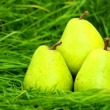 Green pears in the grass — Stock Photo