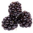 The blackberry (Rubus fruticosus) — Stock Photo
