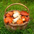 Wild mushrooms in basket. — Stock Photo