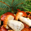 Mushrooms in basket, autumn still life — Stock Photo