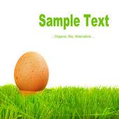 Hen egg in fresh spring grass — Stock Photo