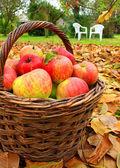 Rode en gele appels in de mand — Stockfoto