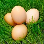 Birds nest with eggs — Stock Photo