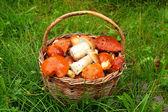 Wild mushrooms in basket. — Stock Photo