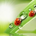 Ladybugs drinking fresh dew. — Stock Photo