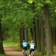 Bikers on the road in a forest — Stock Photo