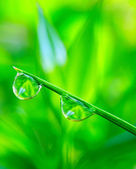 Water drop on the fresh green grass. — Stock Photo
