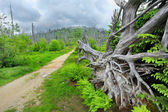 Pathway to Lusen peak — Stock Photo