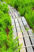 Wooden sidewalk — Stock Photo