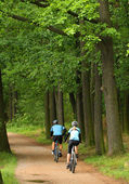 Bikers on the road in a forest — Stockfoto