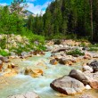 Alpine mountain river in the Dolomites - Italy - Europe — Stock Photo