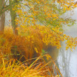 Autumn misty day on a Radbuza river. Beaver sanctuary. — Stock Photo