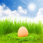 Easter egg in fresh spring grass — Stock Photo #33795577