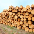 Harvested Scots Pine logs on a stack — Stock Photo