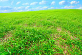 Beautiful spring meadow — Stock Photo