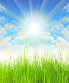 Fresh spring grass against sunny sky — Stock Photo