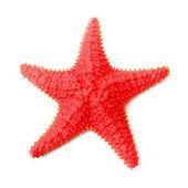 Caribbean starfish (Oreaster reticulatus) — Stock Photo