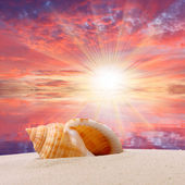 A conch shell on an tropical beach. — Stock Photo
