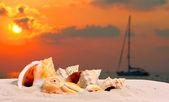En conch skal på en tropisk strand. — Stockfoto