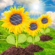 Solar panels on the sunflower — Stock Photo