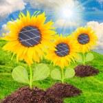 Solar panels on the sunflower — Stock Photo #33801439