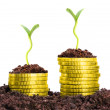 Money growth — Stock Photo #33802013