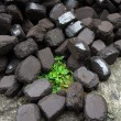 Stock Photo: Brown coal tilt on grass