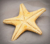 The Caribbean Starfish — Stock Photo