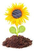 Solar panels on the sunflower — Stock Photo