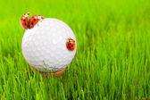 Golf ball and ladybugs — Stock Photo