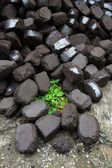 Brown coal tilt on a grass — Stock Photo