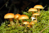 Toadstool mushrooms in the moss — Stock Photo
