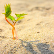 Young seedling growing in a desert sand — Stock Photo